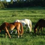 Pferde_Foto Ariane